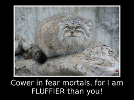 Terrifying Manul by ZauberParacelsus