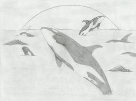 Whales 2 by Trish87