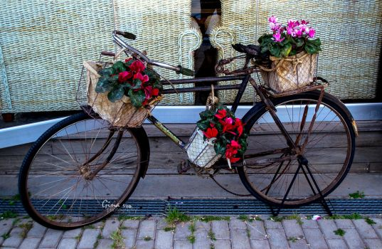 Love vintage. Love bicycles. Flowers are ok too. by ginavd
