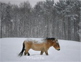 Still snowing by Triumfa