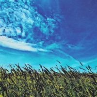 Field Grass Tickles the Sky by levialy