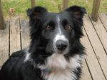 Collie on the Porch by Miss-Whoa-Back-Off