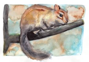 Chipmunk by Paintwick