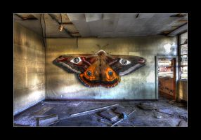 The Butterfly Effect by 2510620