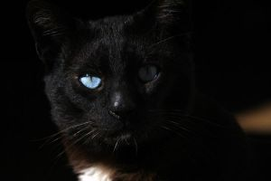 My other cat by limuel