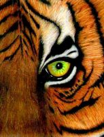 Tigers Eye by jezebel