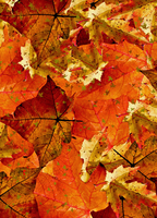 Book Cover Autumn Leaves by WDWParksGal-Stock