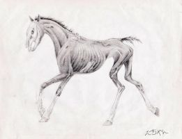 Decomposing horse 4 by DelightsJD