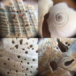 Shells (close up) by DestinyKelly