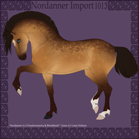 1013 Group Horse Import by Cloudrunner64