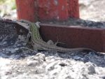 Herpetofauna by imposibilities