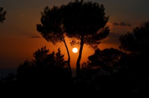 Pines and sunset by Birikein