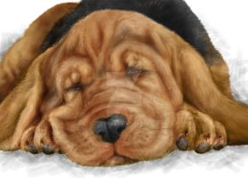 Sleeping doggy by Zzzeus