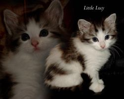 Little Lucy by TheDarkMan