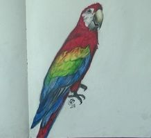 parrot painting by abtheartist