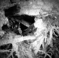 The Roots of a Tree 4 by Jude-Monteleone