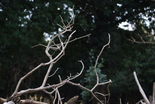 Dry Branches by Very-Free-Stock