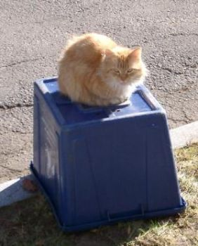 Kitty on the Recycle Bin by Acsumama