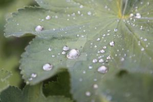 Leaf and Water droplets by arneishere