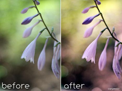 Spring Fever-Photoshop Action by carpesav-stock