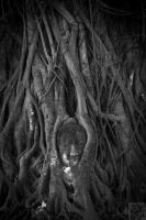 Ayutthaya: In the Grove BW by Mgsblade