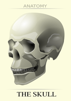the skull by hrum
