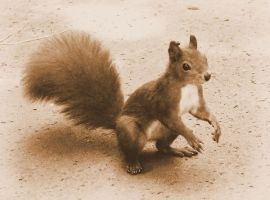 sepia squirrel by Lady-Vetinari