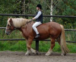 Stock 141: cold-blood horse 4 by AlzirrSwanheartStock