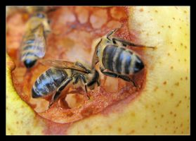 Hungry Bees by photonFUEL