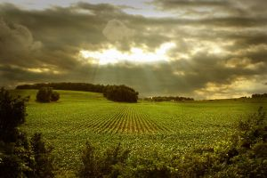 Rolling Fields and Thunder by Humanisms