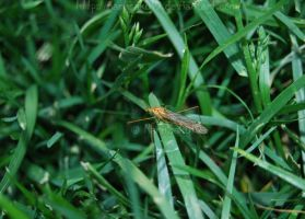 Crane Fly 2 by NaruSaku19