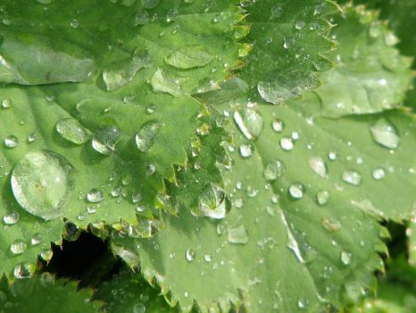Droplets of Life by Wesamio
