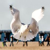 Flight. by Littography
