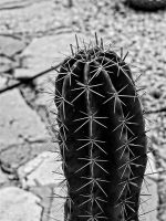 prickles by awjay