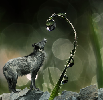 Fascination. by CastleGraphics