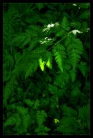 Sunkissed Ferns by Forestina-Fotos