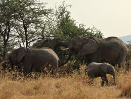 elephant family by jynto