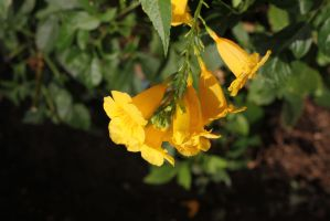 Yellow flower 2 by Newway12