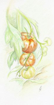 Tomatoes by Squirrelland