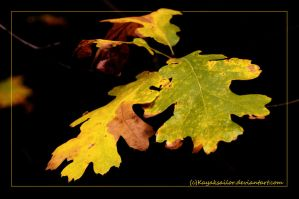 Leaves... by kayaksailor