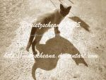 The cat and its shadow by nietzscheana