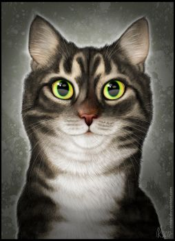 The Tabby by Rinter