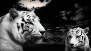 White Tiger by JuniorNeves