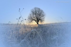 Sunrise on a beautiful frosty winter day 9 by MT-Photografien