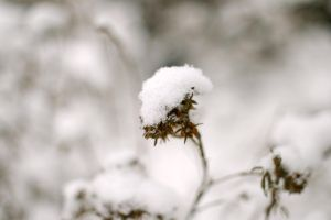 Winter Releases 5 by schon