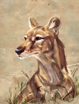Thylacine by AlaxendrA