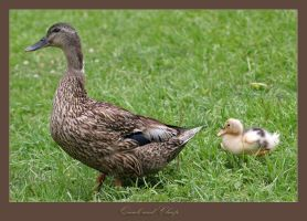 'Quack'  and 'Cheep' by eehan