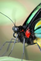 Close up butterfly by xdattax