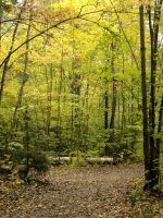 Nature_forest_trees 01 by Aimelle-Stock
