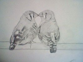 finches by mistresscarrie